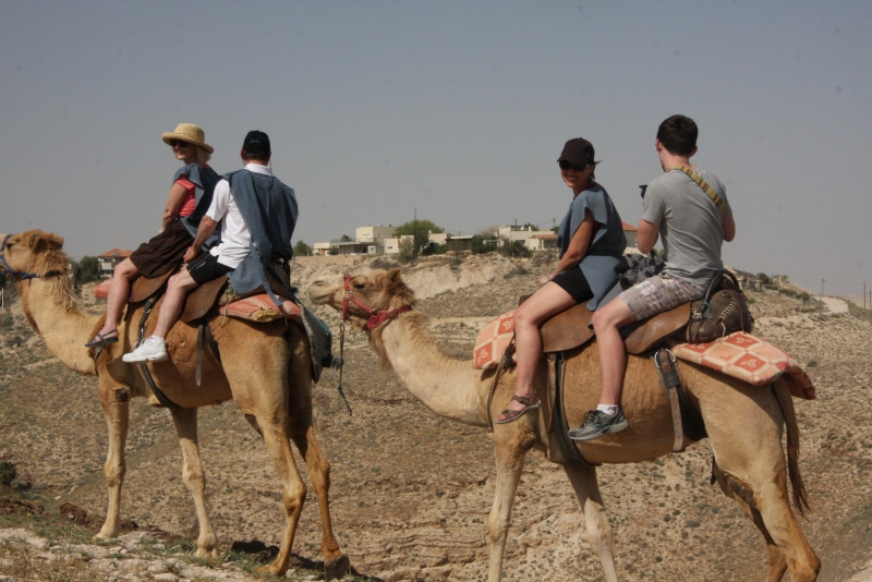 Group riding camels
