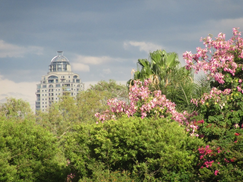 The view of Sandton tower from my house